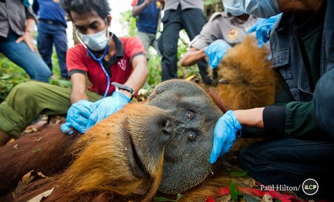 Leuser Ecosystem - Racing Extinction of Our Last Mega Fauna Species