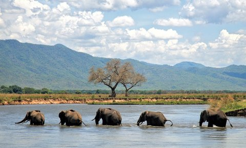 1st Year Progress in Mana Pools World Heritage, Zambezi River Valley, Zimbabwe
