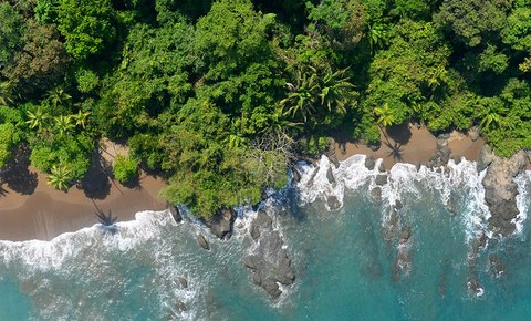 Corcovado National Park, Costa Rica Progress Report 2020