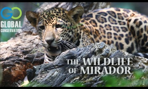 New Video: Wildlife of Mirador National Park, Guatemala