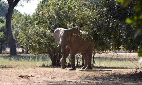 Global Conservation Invests in Global Park Defense for Iconic Zimbabwe UNESCO World Heritage Park