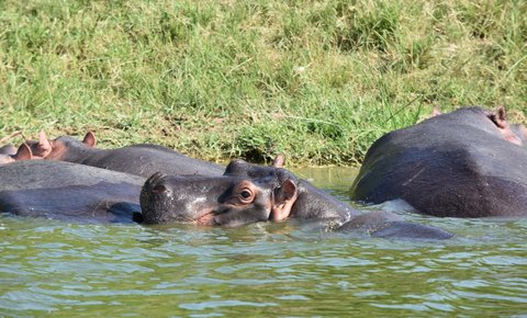 Global Conservation to Deploy Global Park Defense in Murchison Falls National Park, Uganda