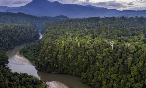 Celebrities band together to Protect Leuser Ecosystem