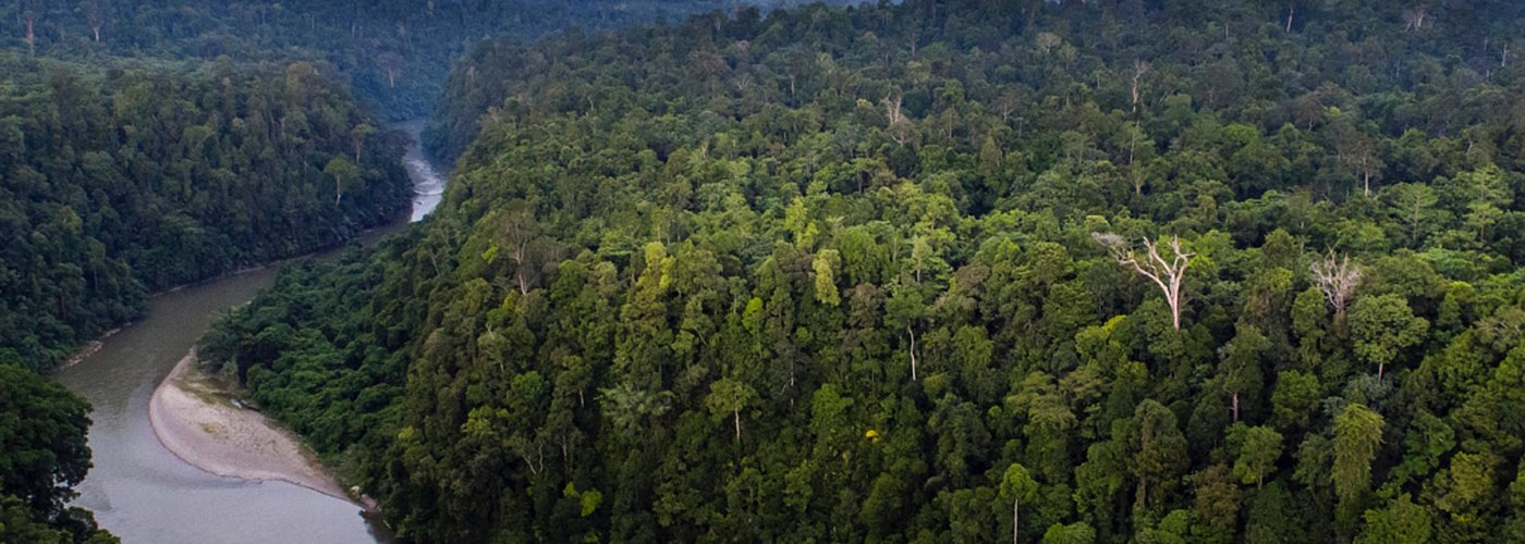 Saving the Leuser Ecosystem – Indonesian Government Rejects Major New Dam Project