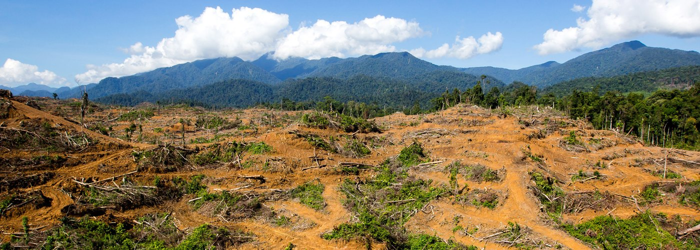 Leuser Ecosystem - New Government Moratorium on Logging and Palm Plantations
